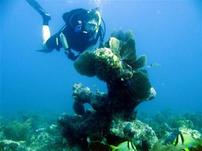 Karen Smock diving